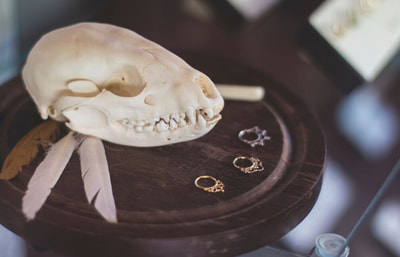 Rings by animal skull at Black Hole Body Piercing